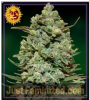 Barneys Farm Cookies Kush Fem 5 Marijuana Seeds